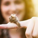 Πώς φτιάχνεται η κρέμα σαλιγκαριού;